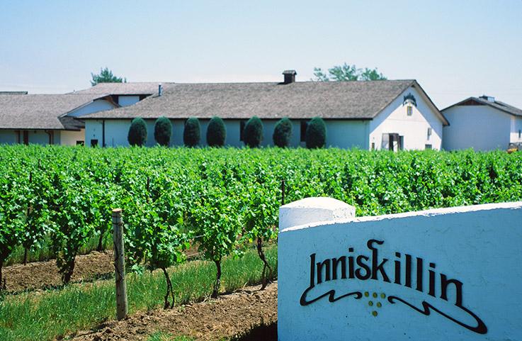 Inniskillin gehört zu den bekanntesten Weingütern von Niagara.