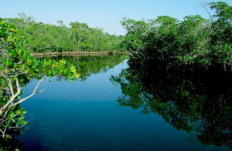 Die Mangroven des Key Largo: John Pennekamp State Parks