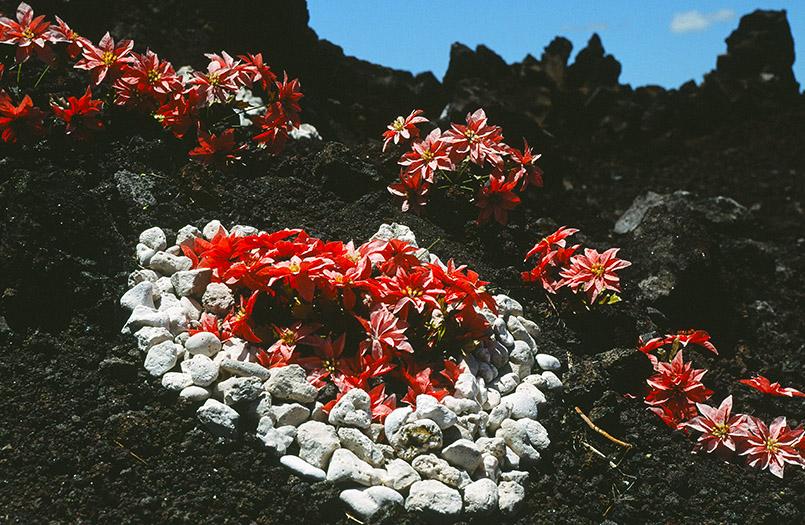 Unterwegs auf Hawaii: herziger Stein-Schmuck am Highway 19b