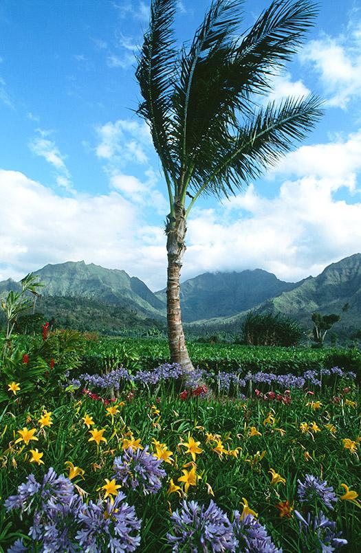 Wildes Hawaii: Die Blumenpracht im Garten des Waioli-Missionshauses von Hanalei auf Kauai