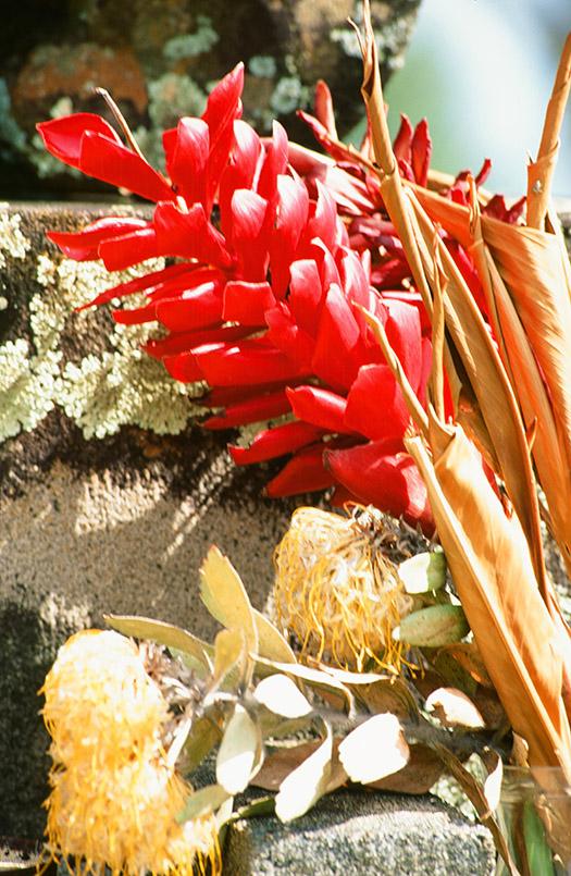 Fast schon tropisch: die Blumenpracht auf Hawaii