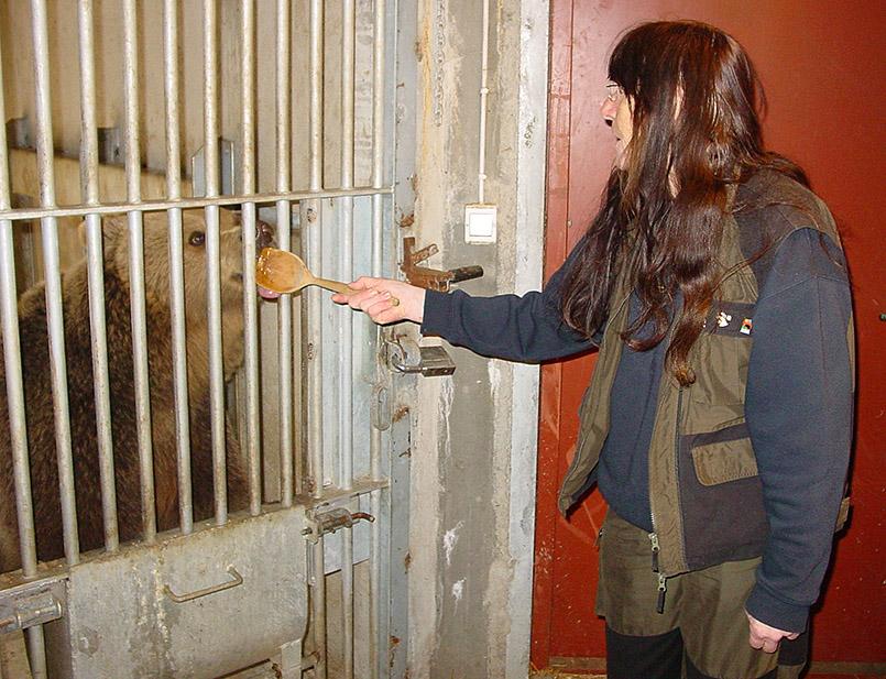 Rugg, die honigliebende Bärin des Vassfaret Bjørnepark