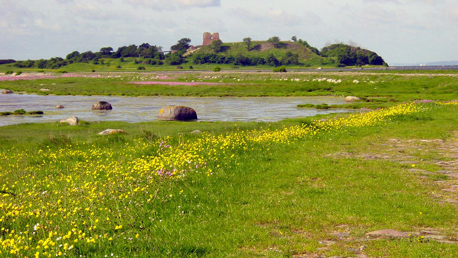 Die Ruine von Kalo Slot an der Südküste von Djursland. Foto: Hilke Maunder