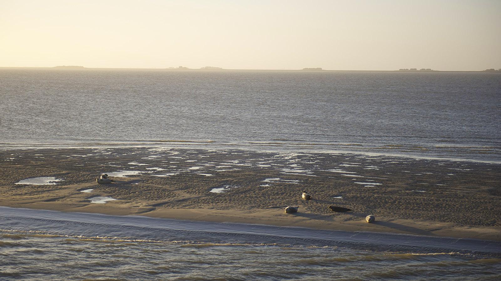 Seehunde auf einer Sandbank vor Hooge, Foto: Hilke Maunder