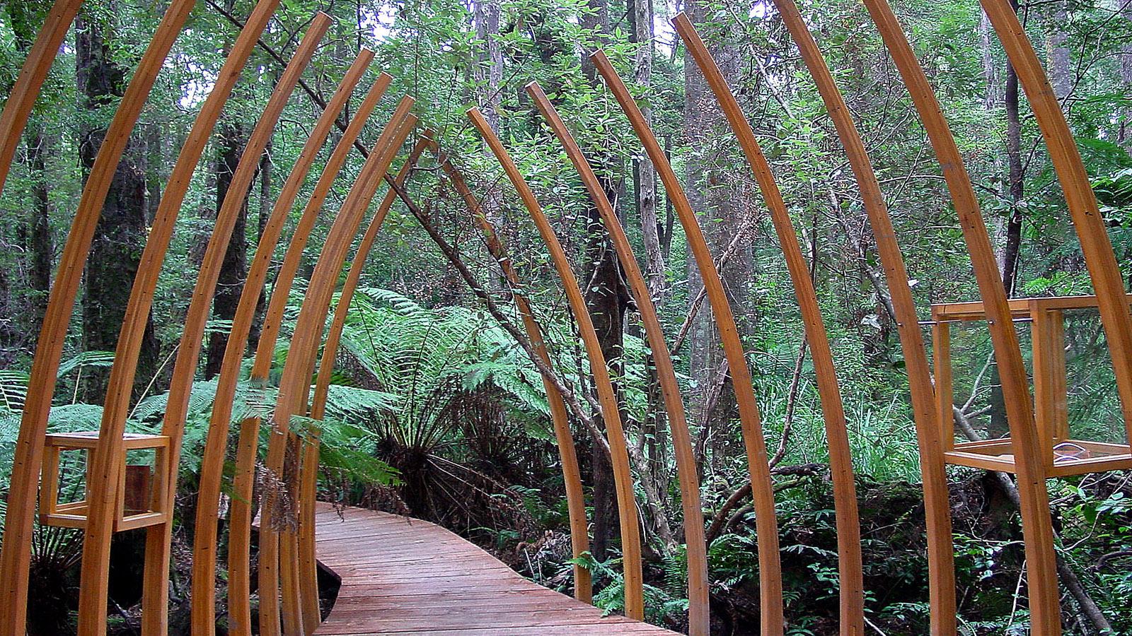 """Tasmanien, Der """"Living Room"""" des Dsmal Swamp. Foto: Hilke Maunder"""