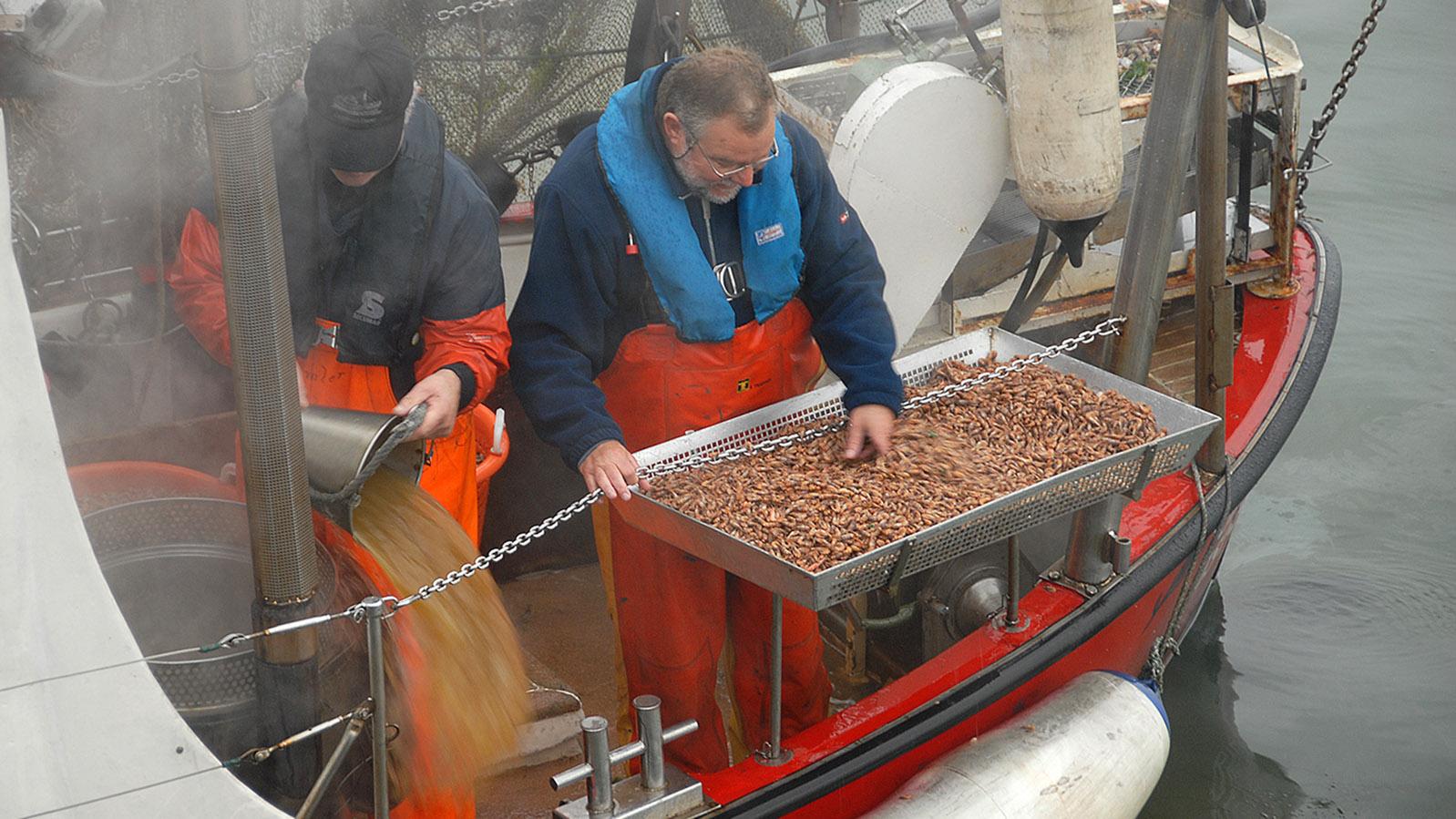 Krabbenfischer im Hafen von List. Foto: Hilke Maunder