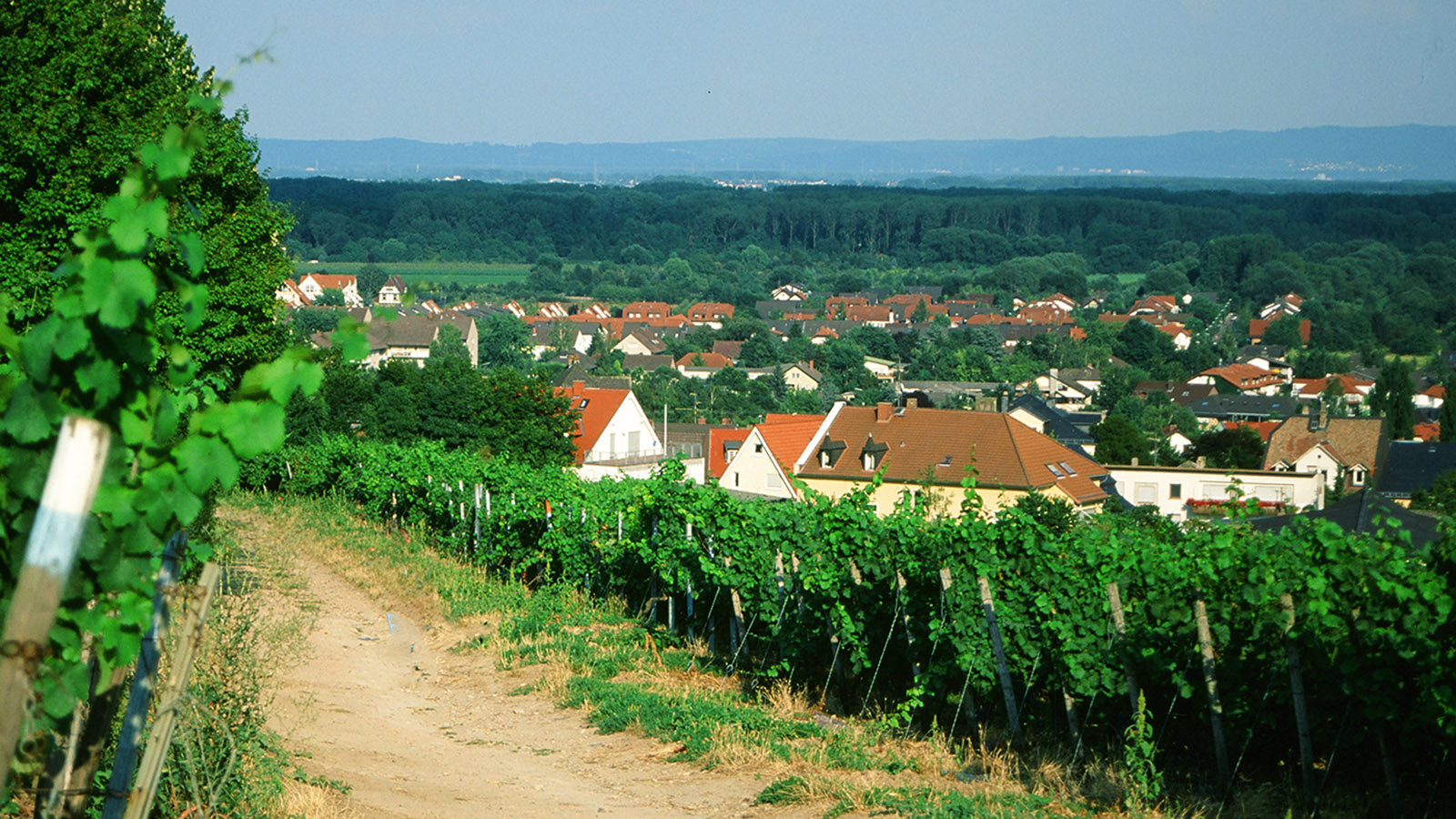 Weinland Rheinland-Pfalz. Foto: Hilke Maunder