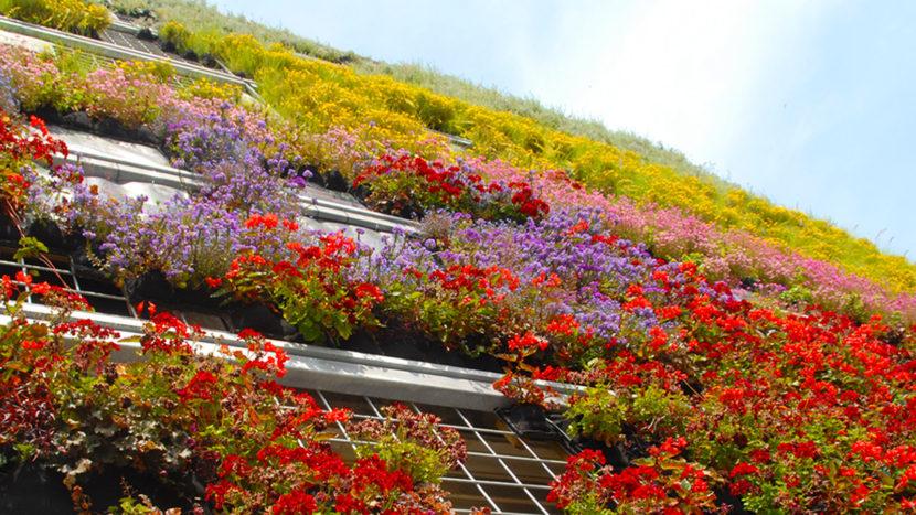 Kopenhagen. Blumenpracht auf der Fassade: die grüne Wand von Det Europæiske Miljøagentur. Foto: Hilke Maunder