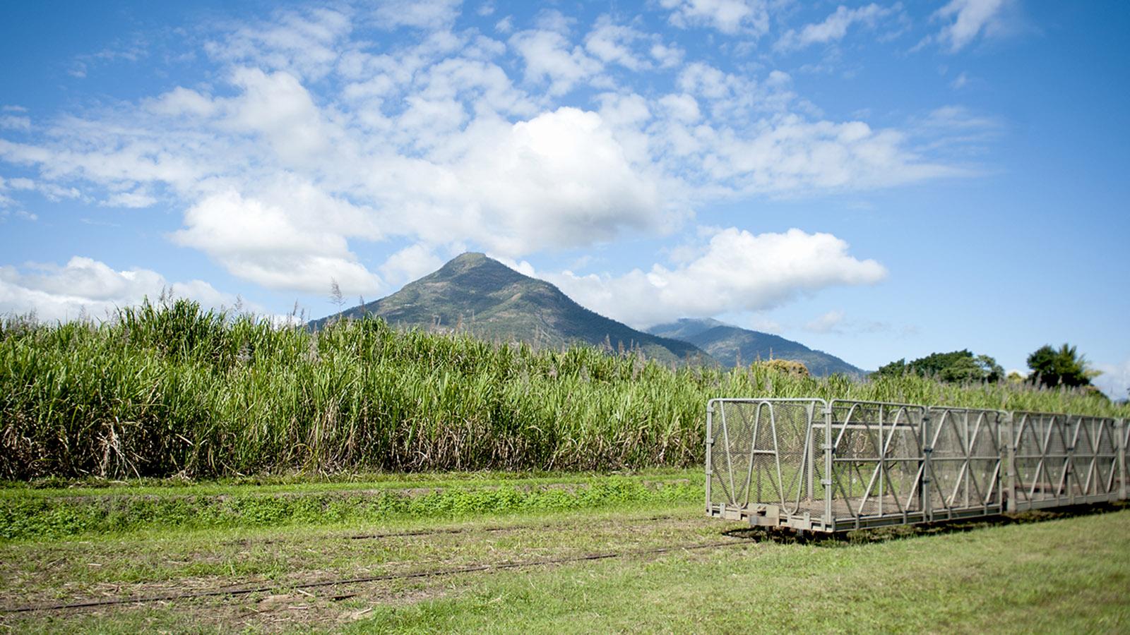 Ostküste: Im Norden von Quensland wird in der Küstenebene Zuckerrohr angebaut auf riesigen Kulturen. Foto: Hilke Maunder