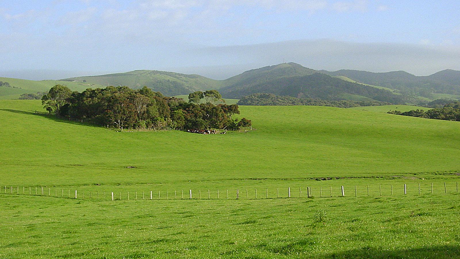 Gippsland: pastorale Idylle bei Yarram. Foto: Hilke Maunder