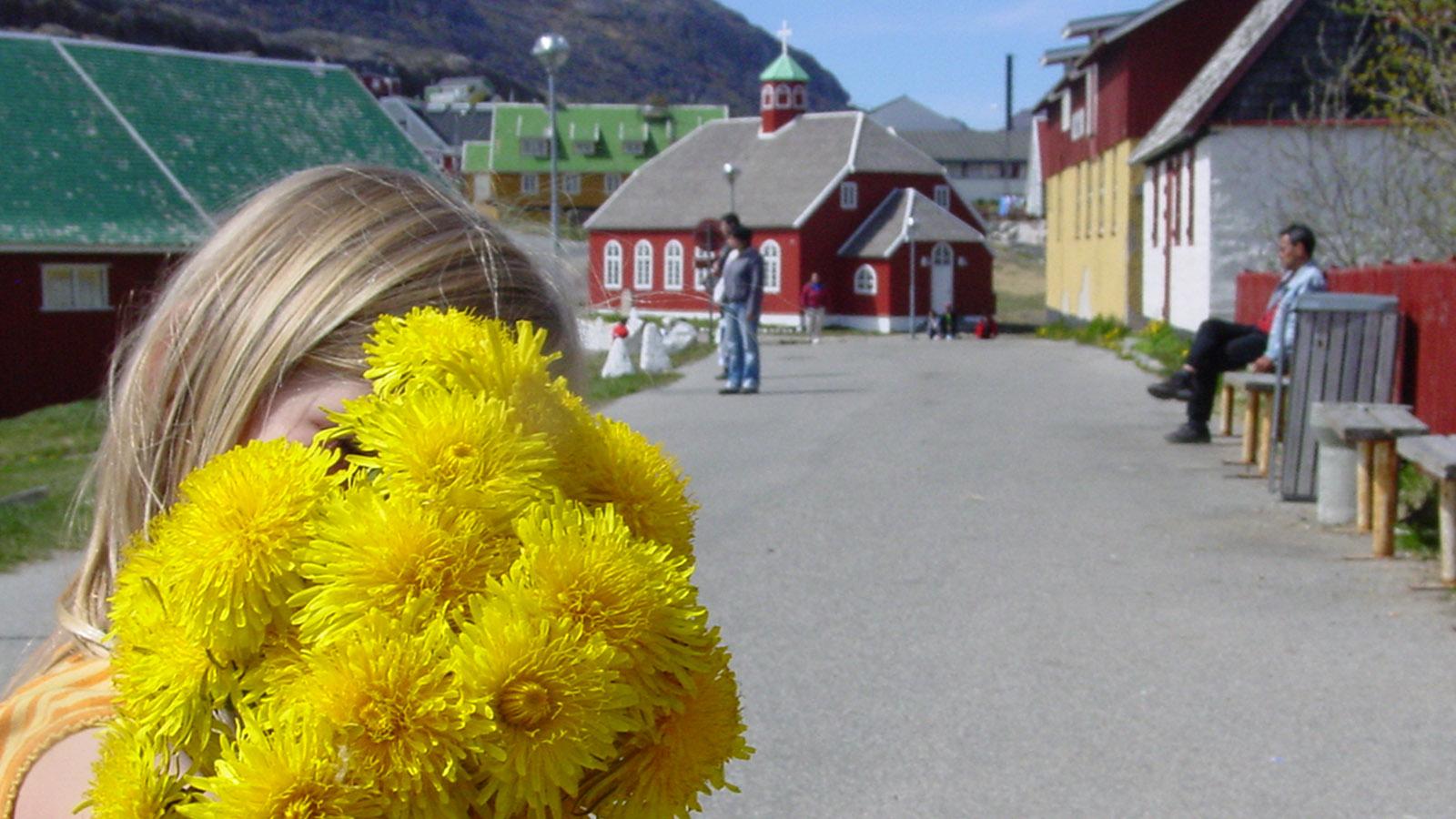 Grönland mit MS Fram: Löwenzahn in Qaqortoq - für Lara viel schöner als die alten Bauten...