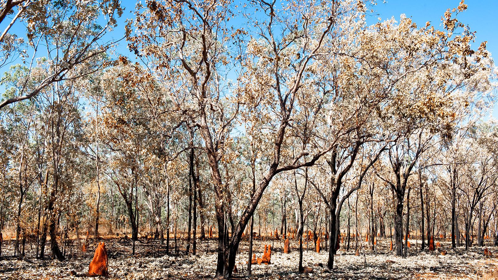Nach dem Waldbrand. Foto: Hilke Maunder