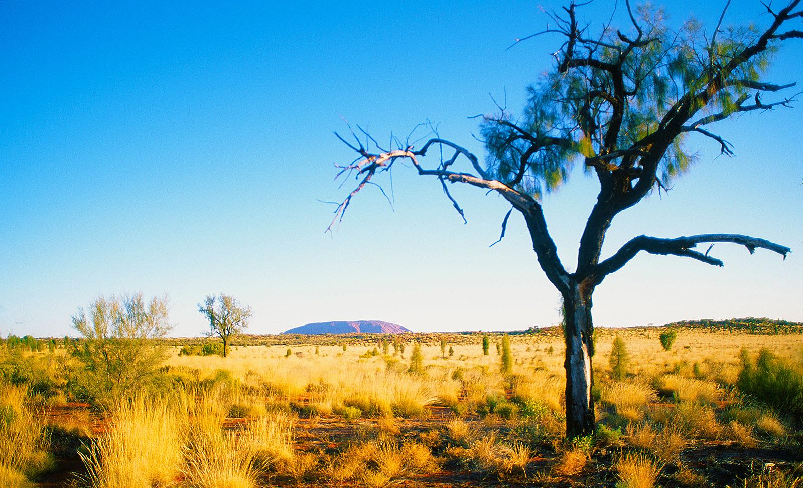 Blick auf den Uluru. Foto; Hilke Maunder