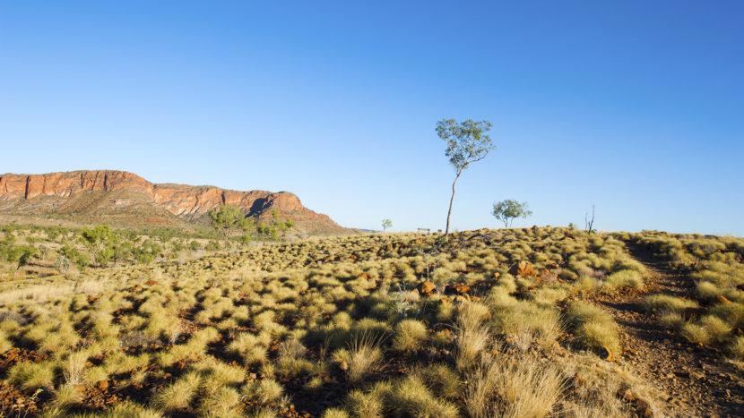 Kimberley. Rote Felsen, weiter Busch: das Outback. Foto: Hilke Maunder