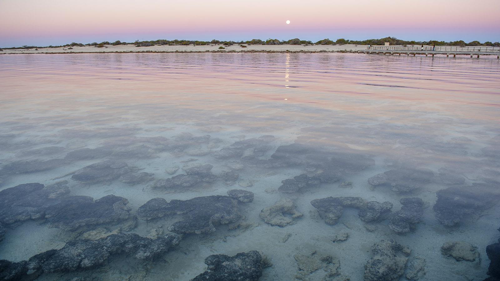 Hamelin Pool im Welterbe Shark Bay. Foto: Hilke Maunder