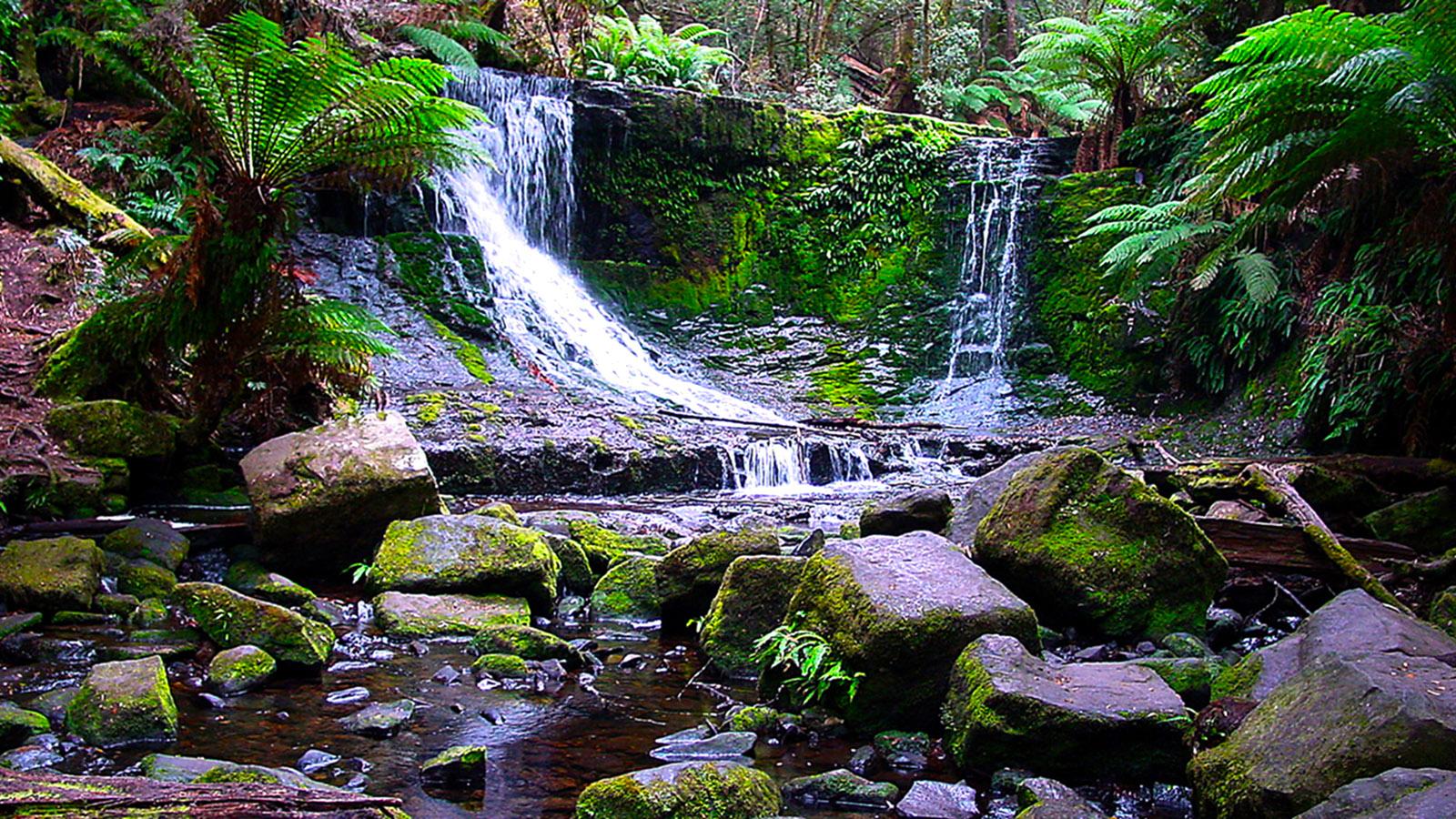 Tasmanien: Mount Field National Park: Horseshoe Falls. Foto: Hilke Maunder