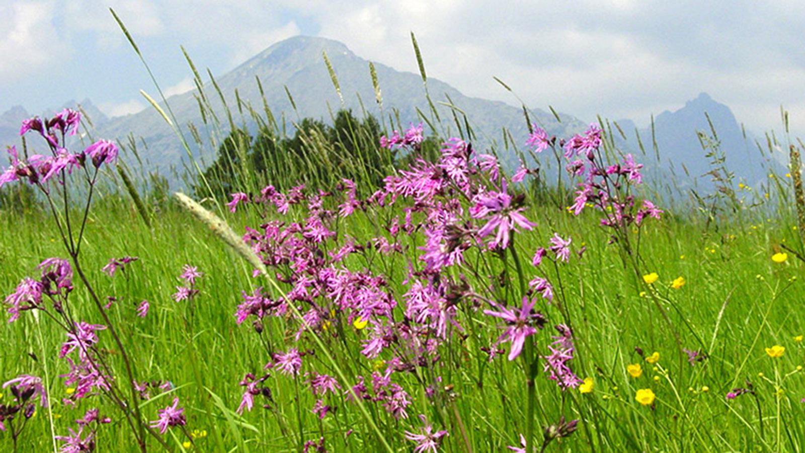 Hohe Tatra: Sommerglück bei Stary Smokovec. Foto: Hilke Maunder