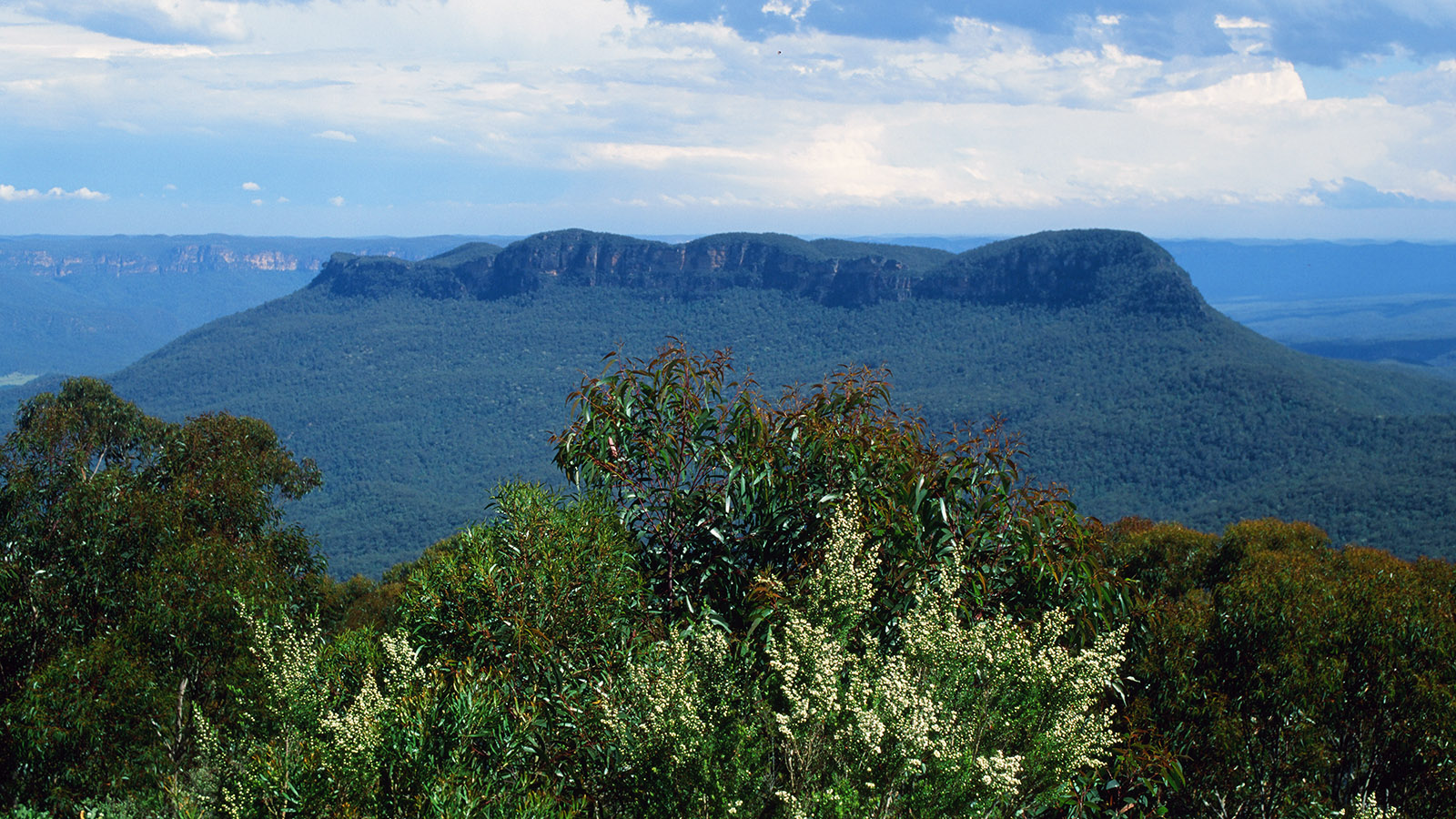 Das Jamison Valley in den Blue Mountains. Foto: Hilke Maunder