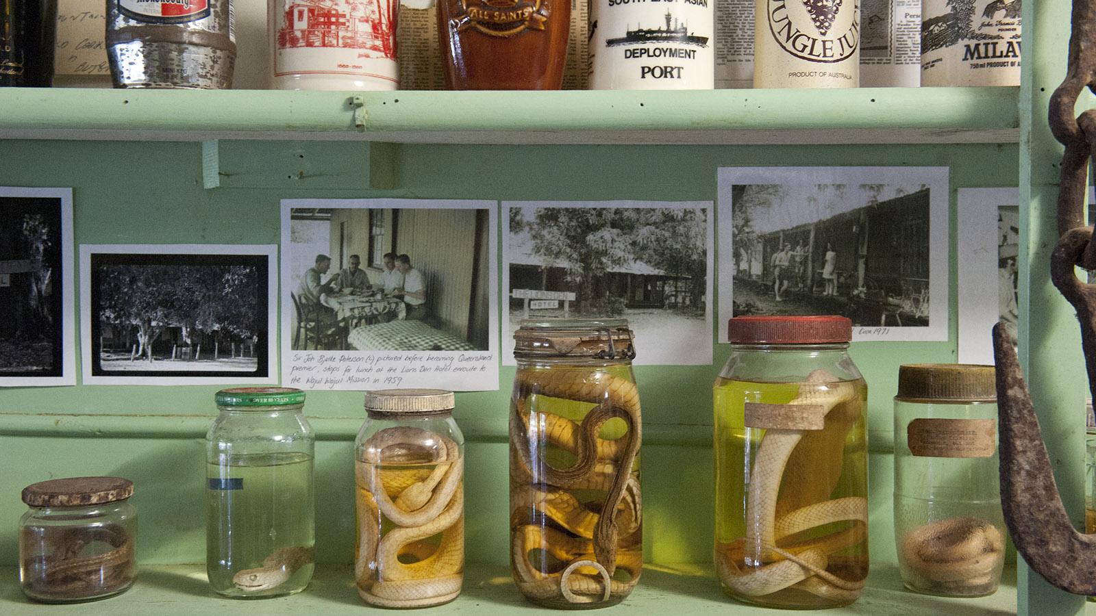 Aussie Pubs: Schlangen, ausgestellt im Lions Den Hotel am Bloomfield Track. Foto: Hilke Maunder