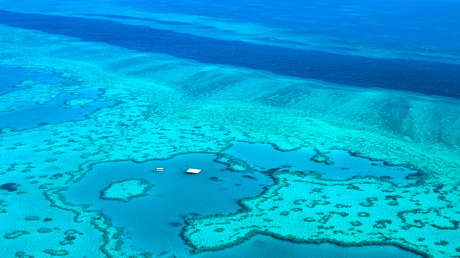 Das Great Barrier Reef bei den Whitsundays: Hardy Reef. Foto: Hilke Maunder