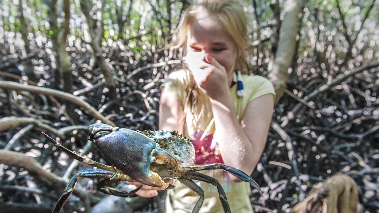 Mudcrabbing: Die Schlammkrabbe ist ja riesig! Meine Tochter hart Respekt für dem Krustentier... Foto: Hilke Maunder