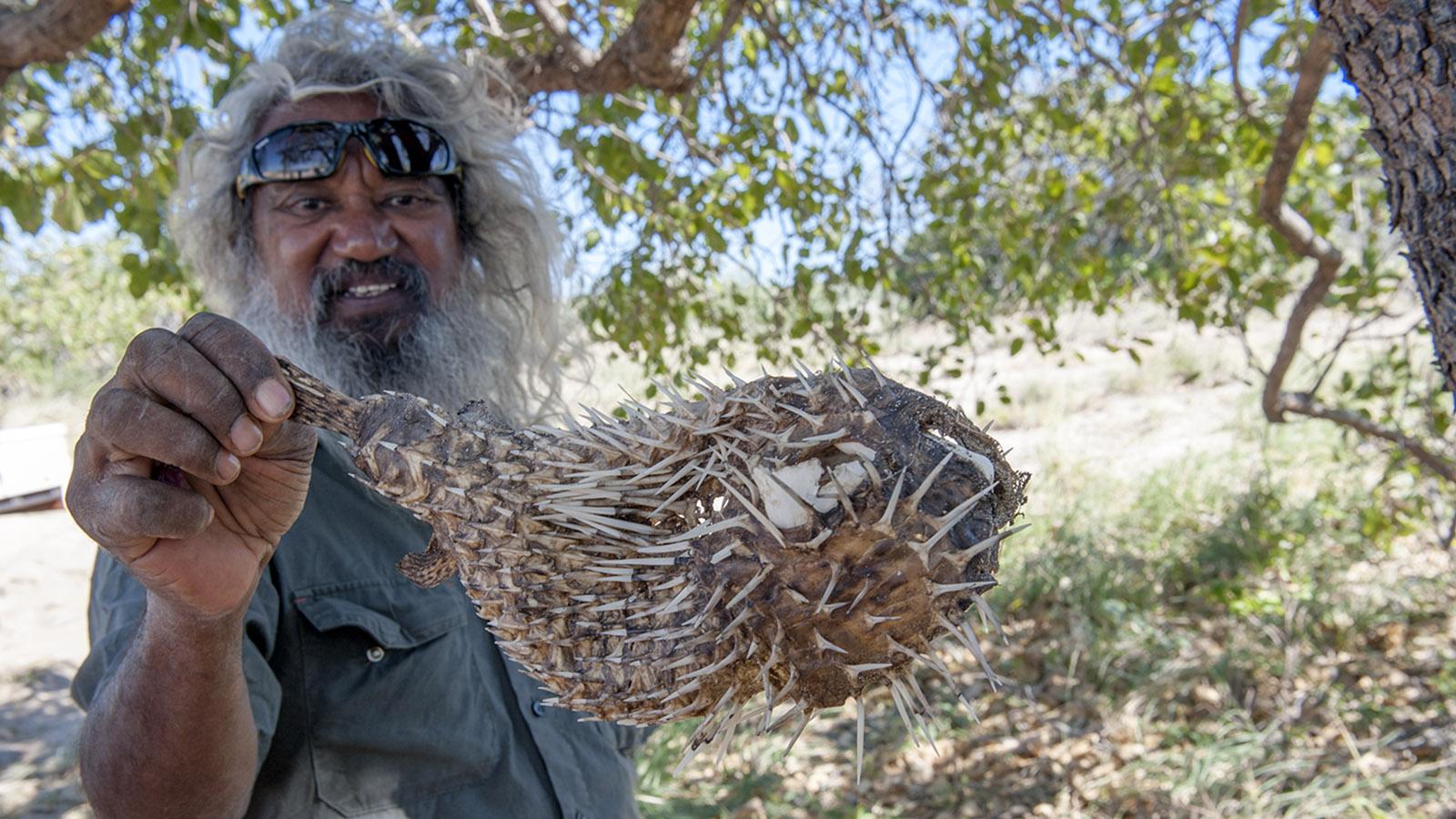 """An der Kimberley-Küste entdeckt Brian Lee einen """"blowfish"""", einen hochgiftigen Kugelfisch. Foto: Hilke Maunder"""