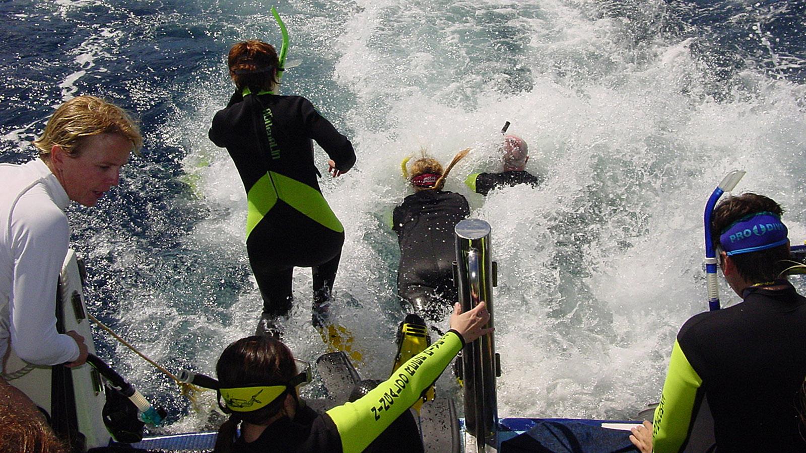 Coral Coast: Ein Walhai wurde gesichtet – ab ins Wasser! Foto: Hilke Maunder
