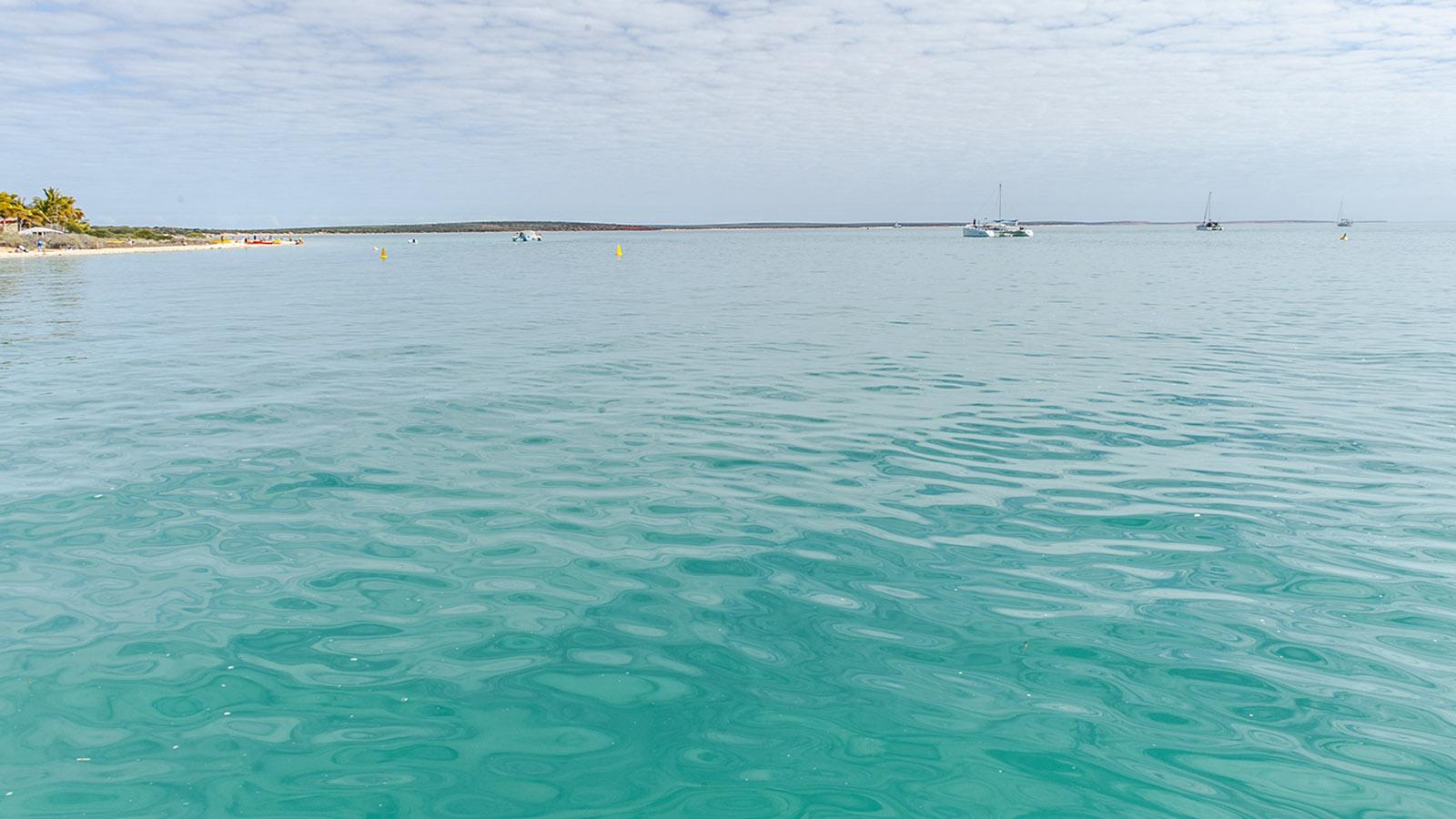 Die Idylle trügt: Shark Bay ist eine tierisch wilde Wildnis. Foto: Hilke Maunder