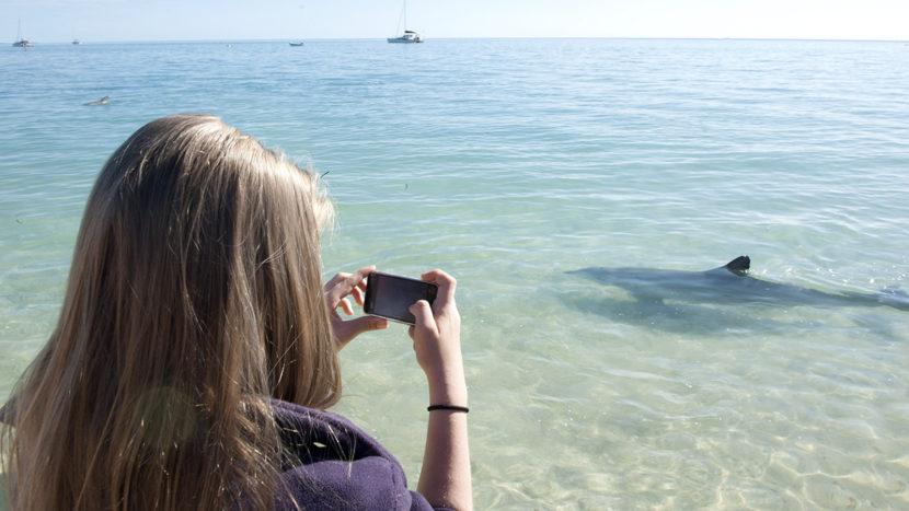Shark Bay: Die Delfine von Monkey Mia kommen jeden Morgen. Foto: Hilke Maunder