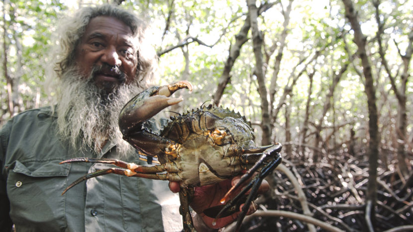 Mudcrabbing & mehr: Brian Lee hat im Morast der Mangroven die erste Schlammkrabbe gefunden. Foto: Hilke Maunder
