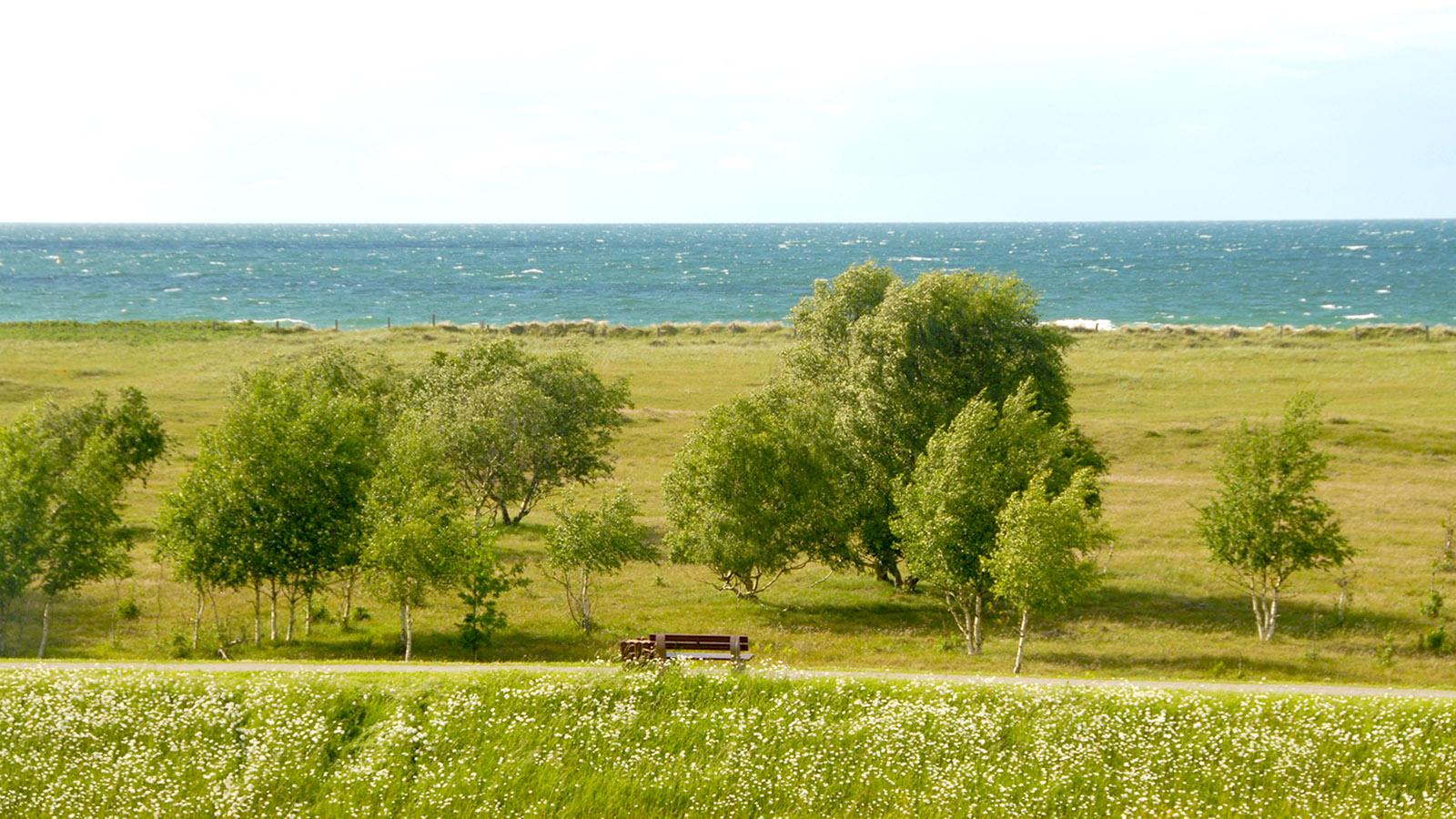 Die Ostsee stets im Blick: Ausblick vom Urlaubsresort Weissenhäuser Strand. Foto: Hilke Maunder