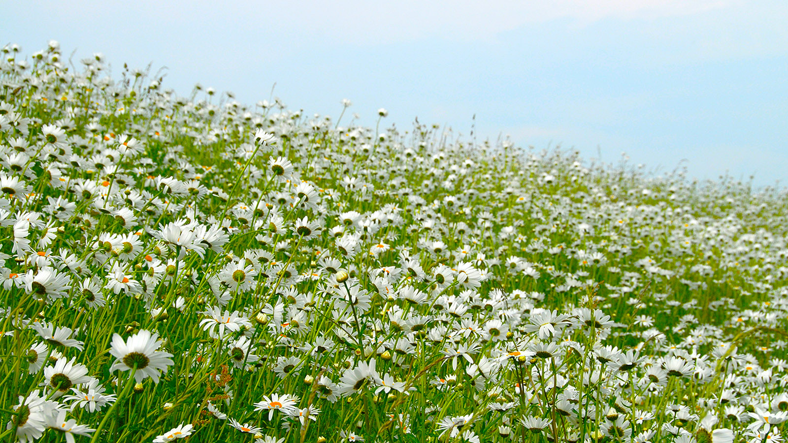 Weissenhäuser Strand: die Blumenwiese am Deich. Foto: Hilke Maunder