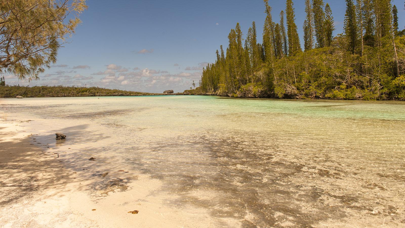 """Cook-Kiefern rahmen die """"piscine naturelle"""" der Île des Pins ein. Foto: Hilke Maunder"""