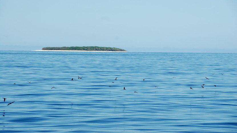 Im weiten Meer taucht bei der Fährfahrt ab Gladstone diese Riffinsel auf: Heron Island. Foto: Hilke Maunder