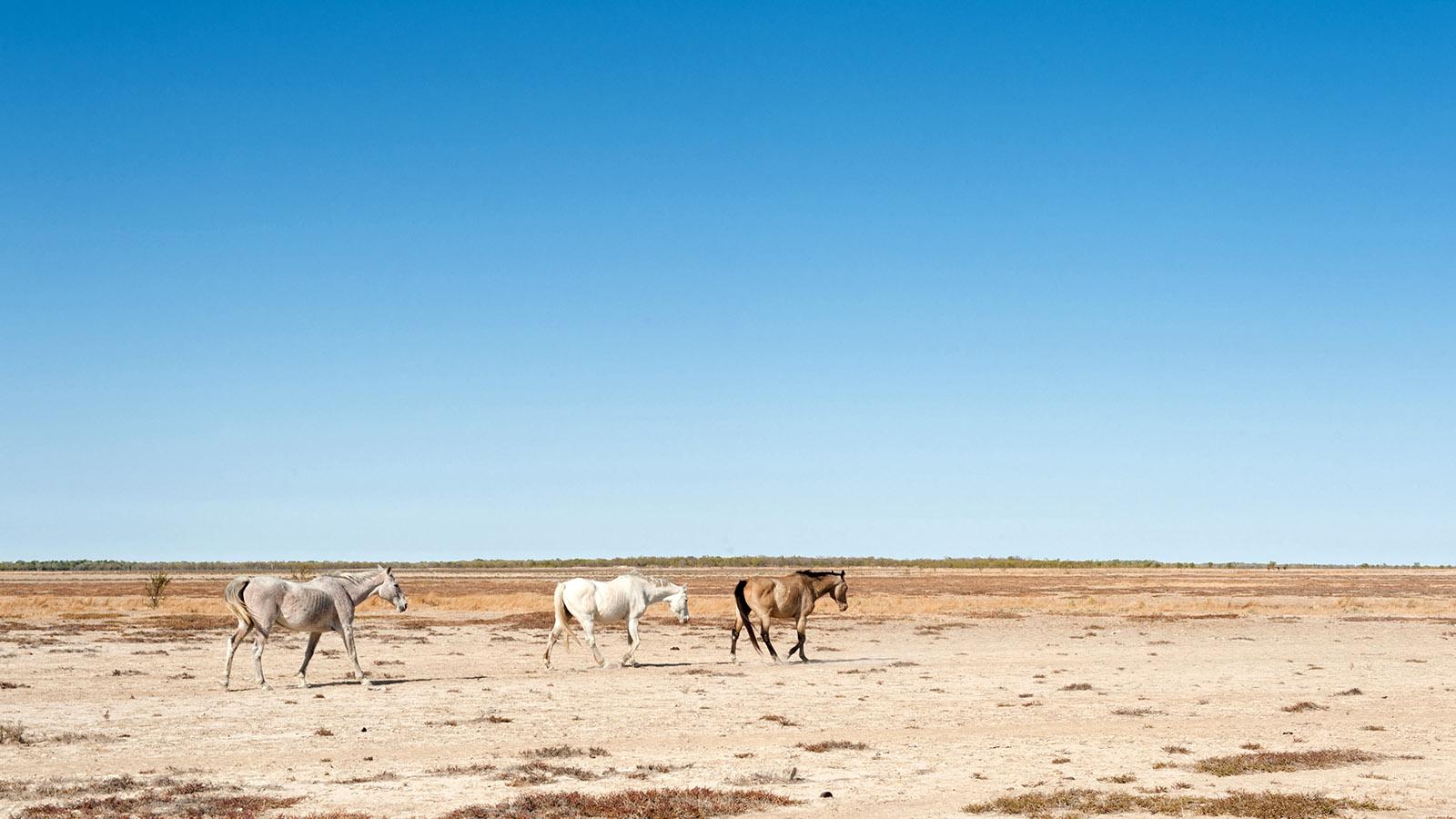 Ausgedörrt: die Halbwüste bei Karumba. Kaum vorstellbar, dass das Wasser hier meterhoch das Land überflutet. Foto: Hilke Maunder