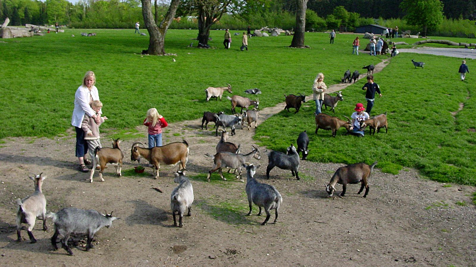 Rauf aufs Rad! Zu Knuthenborg gehört ein Streichelzoo für Kinder mit handzahmen Ziegen. Foto: Hilke Maunder