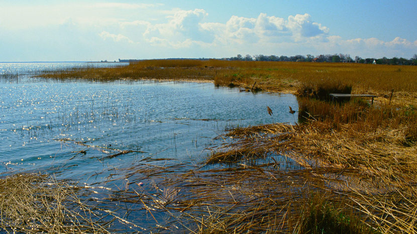 Nationalparks in M/V: Ahrenshoop, am Bodden. Foto: Hilke Maunder