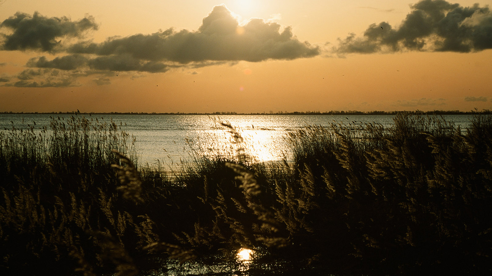 Wildes Mecklenburg: Ahrenshoop, Sonnenuntergang am Bodden. Foto: Hilke Maunder