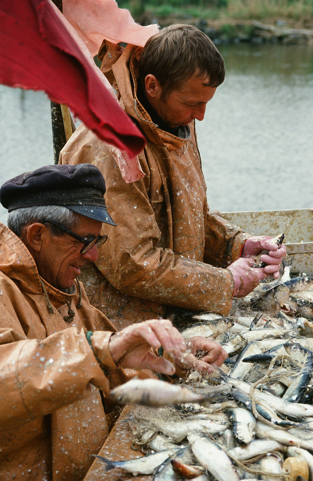 Klützer Winkel, Dassow: Heringsfischer bei der Arbeit. Foto: Hilke Maunder