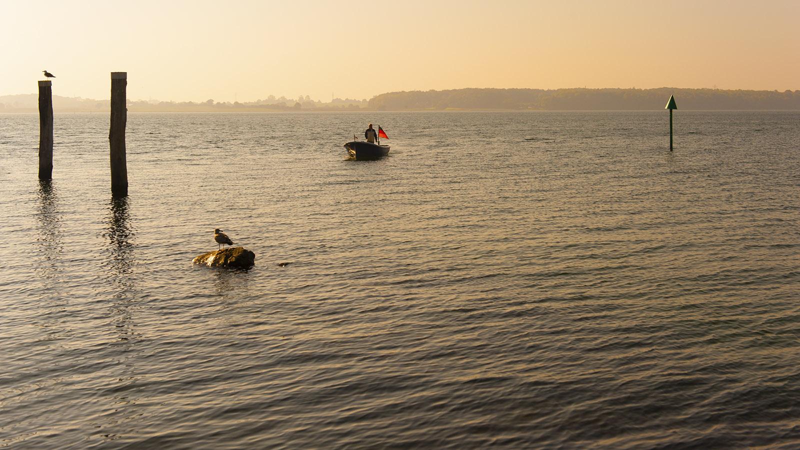 Zum Sonnenaufgang kehrt er heim: ein Fischer aus Maasholm. Foto: Hilke Maunder