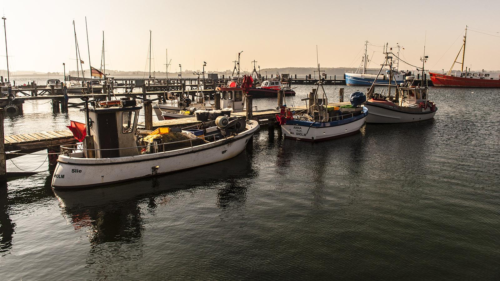 Die Fischerei spielt an der Schlei noch eine große Rolle – besonders in Maasholm. Foto: Hilke Maunder