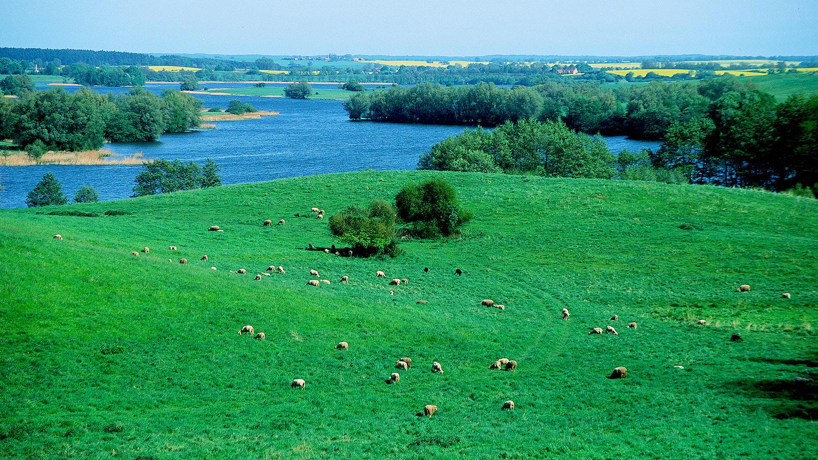 Wldes Mecklenburg, Sanft gewellt mit vielen Seen: die Mecklenburgische Schweiz bei Neuhof. Foto: Hilke Maunder