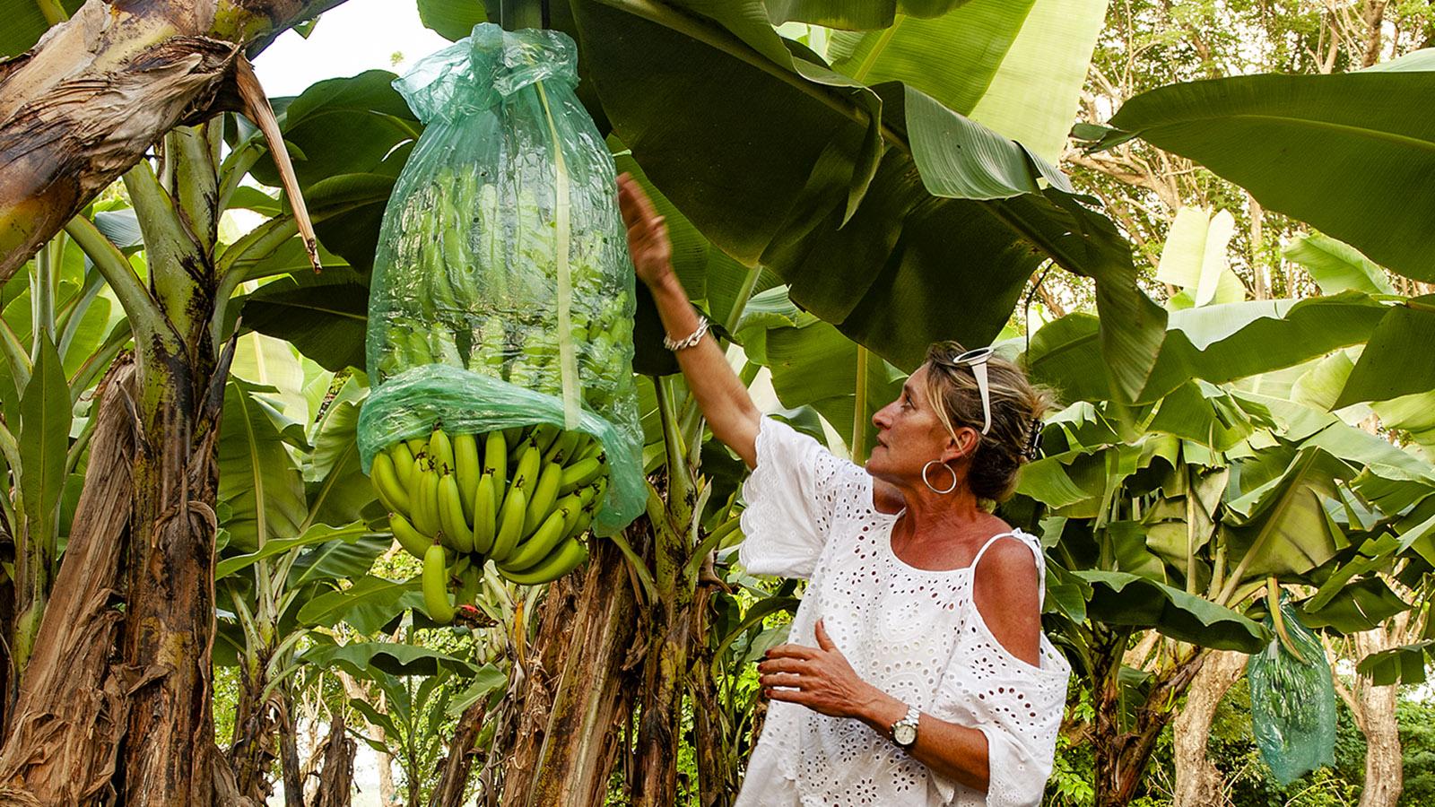 Warum im Plastiksack? So reifen Bananen schneller - und sind vor Parasiten geschützt, sagt Veronika Kuster Kudrna. Foto: Hilke Maunder