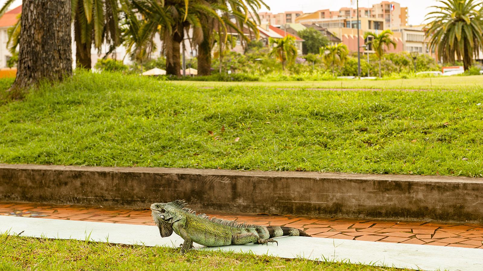 Martinique. Tierisch, die Hauptstadt Fort-de-France! Foto: Hilke Maunder