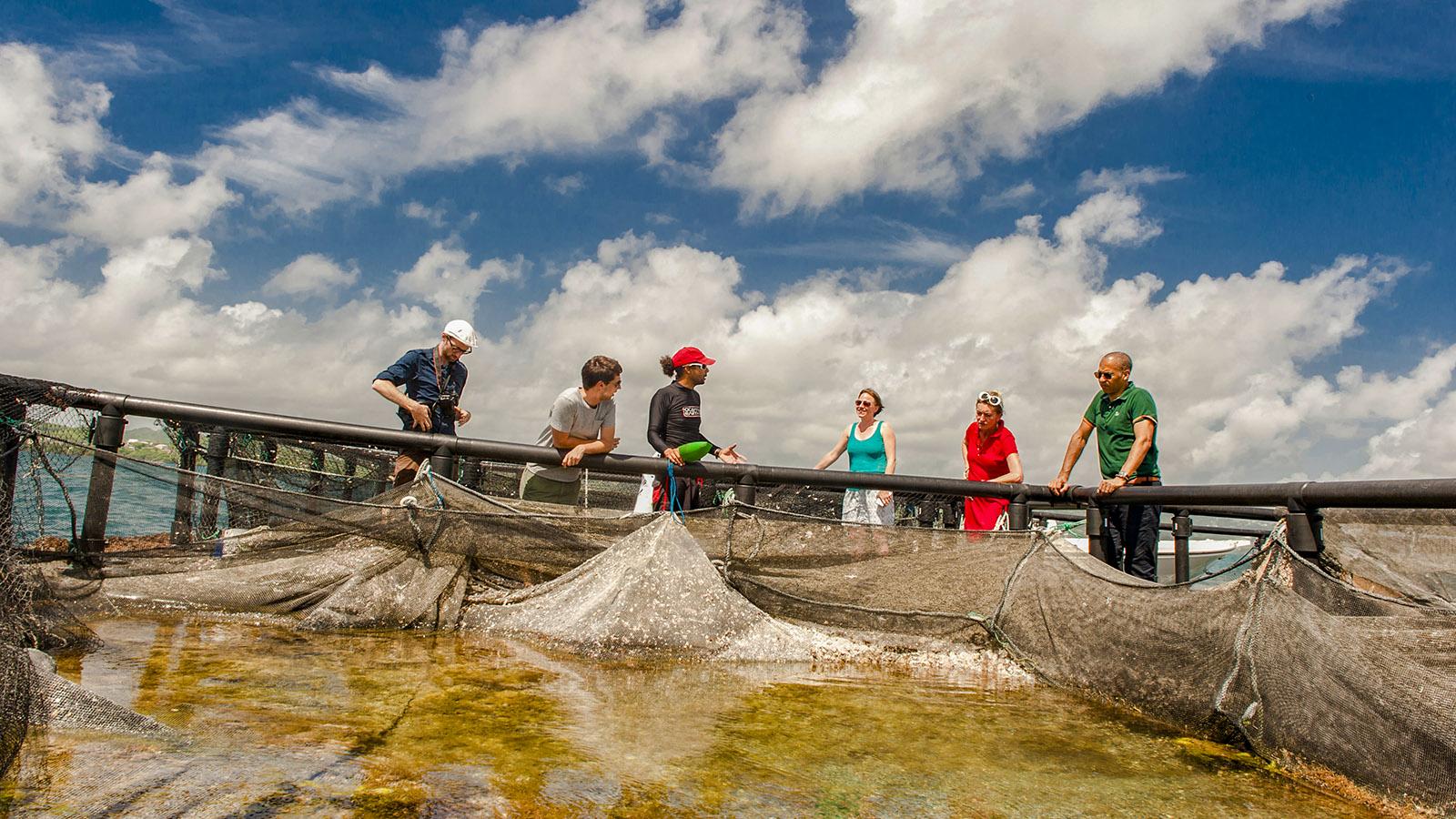 Martinique: Xavier Suivant züchtet in der Bucht von Robert Speisefische wie karibischen Wolfsbarsch. Foto: Hilke Maunder