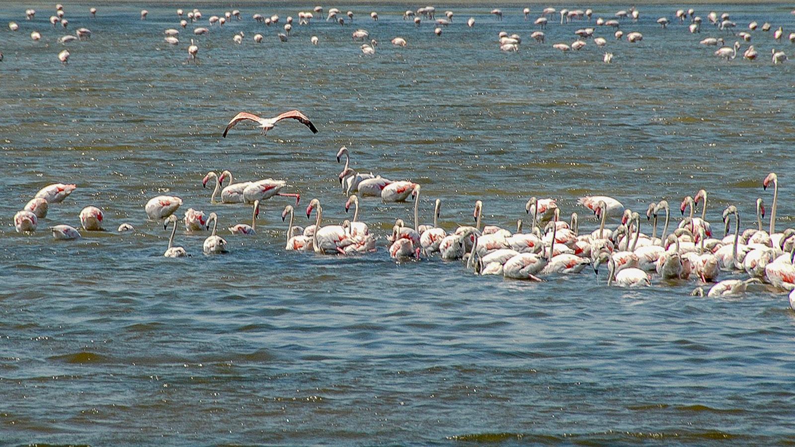 Flamingos. Foto: Hilke Maunder