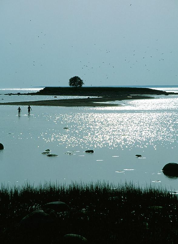 Estland/Püünsi: Insel, spielende Kinder im Meer im abendlichen Gegenlicht