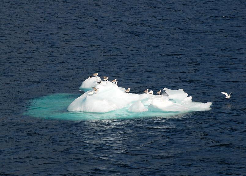 Eisige Schönheiten bei Skoldungen auf Grönland