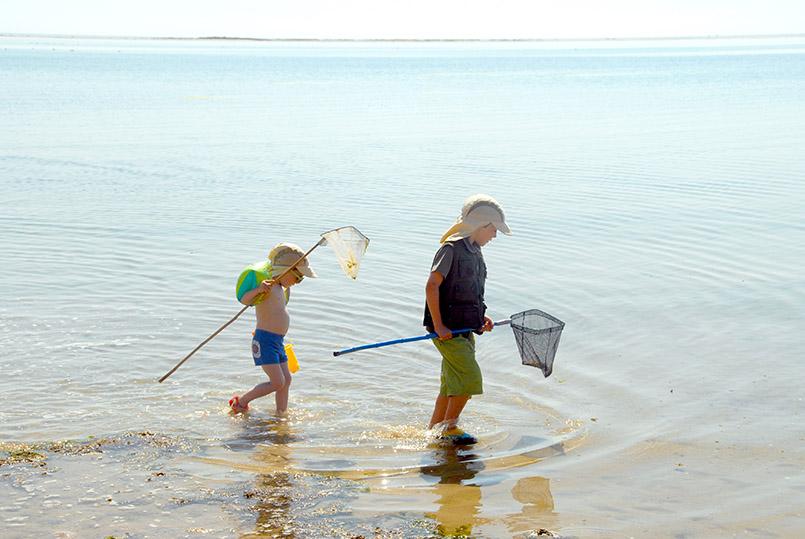 Amrum: Wittdün: Ferienvergnügen für Kinder - mit dem Kescher Kleintier fangen