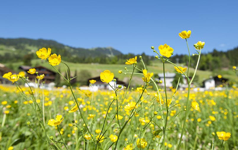 Bergsommer in Österreich